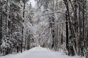 Winter_Wonderland_in_Apgar_Village_(5230363852)