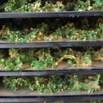 raw kale chips recipe