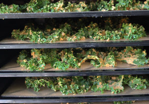 raw kale chips recipe