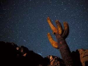 cactus cosmos