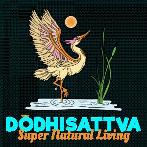 Dodhisattva